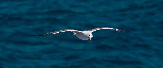 Möwe fliegt über das Meer Usability und Gamification